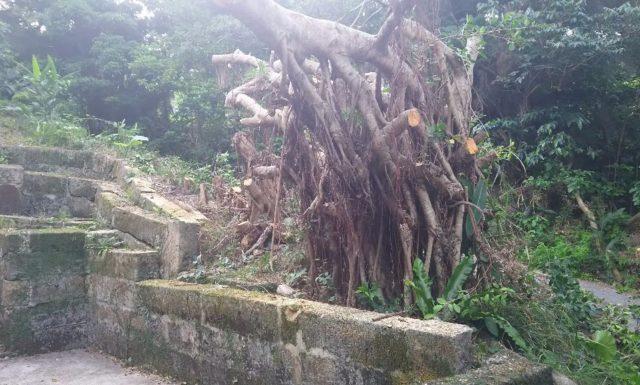 u家 樹木伐採 沖縄県与那原町
