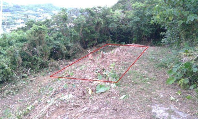 伐採作業 g家 北中城村