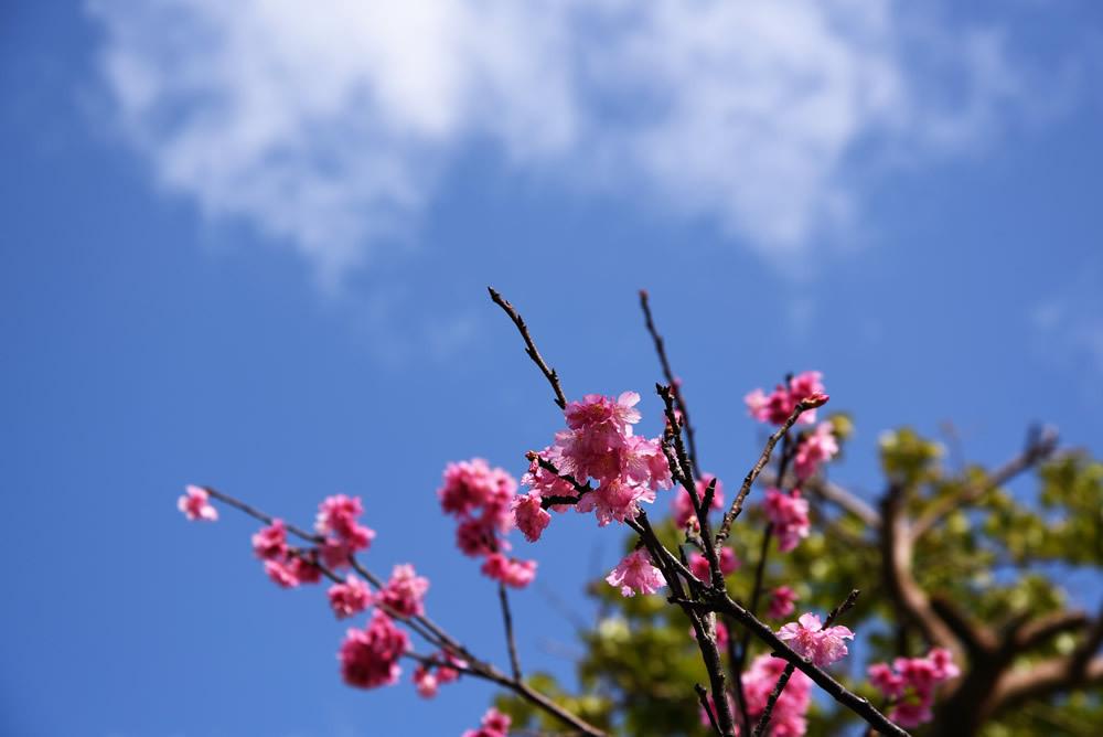 3月の和風名月は『弥生』